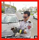 نجات گربه از موتور خودروی سواری