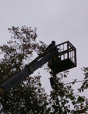 عملکرد ستاد بحران سازمان سیما، منظر و فضای سبز شهری در بارش های اخیر